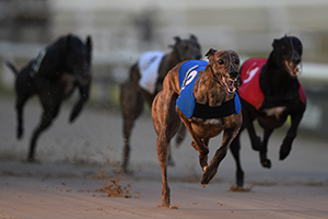 Greyhound Betting and Odds | Greyhound Racing | Betfred